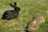 Rede sextavada do coelho do engranzamento de fio de Sailin