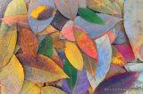 3D Kleurrijke Ontwerp van Veren voor het Schilderen van de Decoratie op het Comité van de Muur