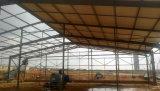 Gambrel Pre-Проектировало светлое здание стальной структуры
