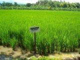 Проводник почвы Unigrow для засаживать риса
