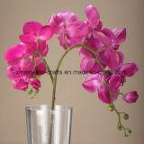 15 головок удваивают цветки искусственних цветков орхидеи Phalaenopsis высокого качества стержней декоративные