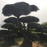 模倣された内部の飾られた松の木