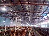 Prefabricated 가금은 유숙하거나 닭장