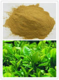 Green Tea Extract, Tea Polyphenol 95%, UV
