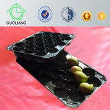 Material morbido Disposable FDA Approved Food Grade Custom 39*59cm Plastic Fruit Container Made From pp