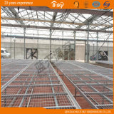Po Film Greenhouse com Multi-Span Structure