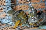 Las jaulas pequeñas Cat & recinto de malla de acero inoxidable de malla de cuerda
