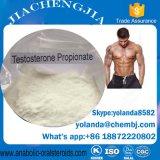 판매를 위한 주사 가능한 신진대사 스테로이드 테스토스테론 Propionate 노출량 100mg