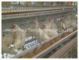 Matériel Breeding galvanisé de cage de couche de batterie de machines de ferme de poulet