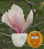 100% reines Magnolie-Schmieröl