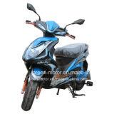 Scooter Elétrico de 1000W / 800W / 1500W, Motocicleta Elétrica, Padels Elétricos para Ciclismo (Puma)