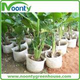 Het planten van Zak voor de Plantaardige Fruitteelt van het Gewas
