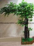 정원 훈장 가짜 큰 Ficus 반얀 나무