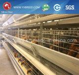 Ovo de Argélia/de galinha camada das baterias da exploração agrícola para galinhas poedeiras