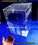 De duidelijke AcrylVoeder btr-S1017 van de Vogel van het Venster