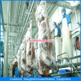 Línea de sacrificio en procesamiento de carne en casa de aves de corral