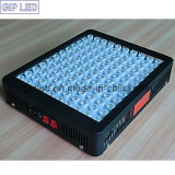 GIP 600W LED Grow Light für Medical Hemp Plant