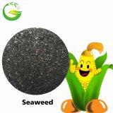 Água - fertilizante extra do pó da alga solúvel