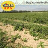 Сертификат органическое высушенное Goji Lbp Ecocert мушмулы