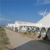 Structure d'acciaio Poultry Farm e Full Set Poultry Equipment