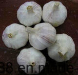 중국에 있는 백색 신선한 마늘