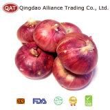 Лук высокого качества китайский красный свежий