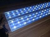 luz do aquário do diodo emissor de luz de 162W White+Blue para o tanque de peixes