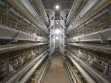 Клетка Longfeng прочная и стабилизированная автоматическая цыпленка (гальванизированные горячие)