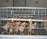 Geflügel-Huhn-Bauernhof sperrt das Gerät für das Hünchen ein, das heiß ist,/eingetaucht galvanisiert Kälten (ein Typ Rahmen)