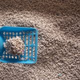 Очистьте деревянное здоровье сора кота и трудное Cluping