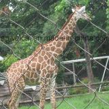 철망사 동물원 담