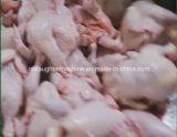 Linha automática depenador da matança das aves domésticas da galinha