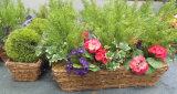 정연한 자연적인 Handmade 꽃 재배자