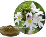 Uittreksel Van uitstekende kwaliteit van de Ogentroost van het 20:1 van het 10:1 van het anti-oxyderende het Natuurlijke Flavone 4:1, die het Uittreksel van het Kruid van het Zicht verbeteren