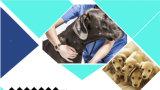 Ворот Catoon щенка кота собаки продукта любимчика (C010)