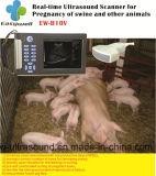 Sistema Ew-C8V del ultrasonido de Doppler del color de la computadora portátil con la punta de prueba convexa para el veterinario con el paquete de programas informáticos obstétrico de la medida de la especialidad