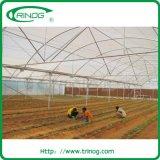 Hohes Tunnelgewächshaus der multi Überspannung für das Landwirtschaftswachsen