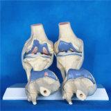 Articulación de la rodilla esquelética modelo para la enfermedad Comparación de Productos Médicos (R020904)