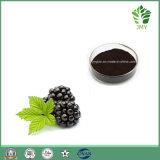 4:1 do extrato da amora-preta da alta qualidade, 10:1, antocianidas do 20:1 anticancerosas