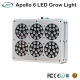 標準的なデザインアポロ6 LEDはハーブ及び花のために軽く育つ