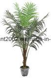 Piante tropicali dell'albero di falsificazione di prezzi di fabbrica