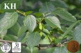 Chlorogenic Zuur 5%-98% van het Uittreksel van Ulmoides van Eucommia