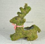 طحلب سلة حيوانيّ زخرفة حديقة مزارع