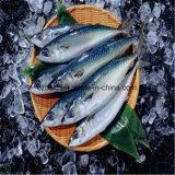 Kaltlagerung für Fruilt und Fische