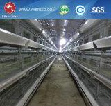 10, cage de 000 oiseaux de poulet utilisée pour la ferme de la Zambie du Nigéria (A-3L90)