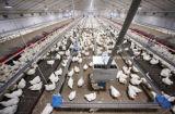 Strumentazione dell'azienda agricola per la griglia con la costruzione della Camera del bestiame della struttura d'acciaio