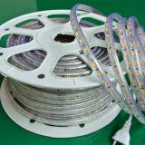 SMD5050 Bule/Grün/rotes LED-Seil-Licht