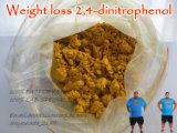 Polvo amarillo farmacéutico 2, 4-Dinitrophenol/DNP para la pérdida de peso