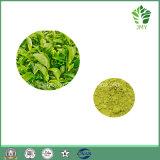 100% natürlicher grüner Tee-Auszug, EGCG und Tee-Polyphenole