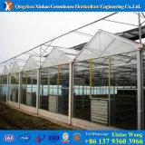 Дом фабрики Китая стеклянная Hydroponic зеленая для томата